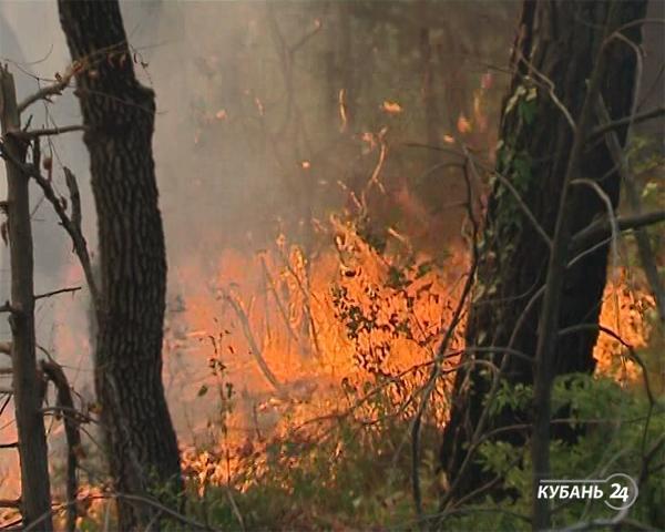 «Факты 24»: сразу несколько районов Кубани охватили пожары, кубанец Геннадий Падалка вышел в открытый космос