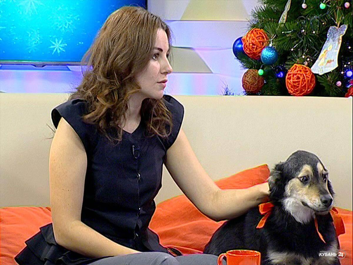 Основатель приюта «Краснодог» Наталья Дубницкая: каждый год — это борьба за выживание приюта и питомцев
