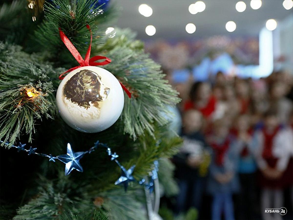 «Факты 24»: губернаторскую елку в Краснодаре посетило около 1 тыс. детей, в Красной Поляне открылась оленья ферма