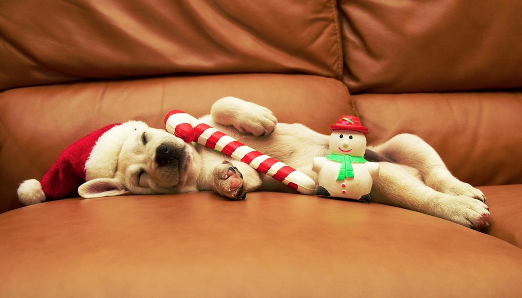 Новый год на диване