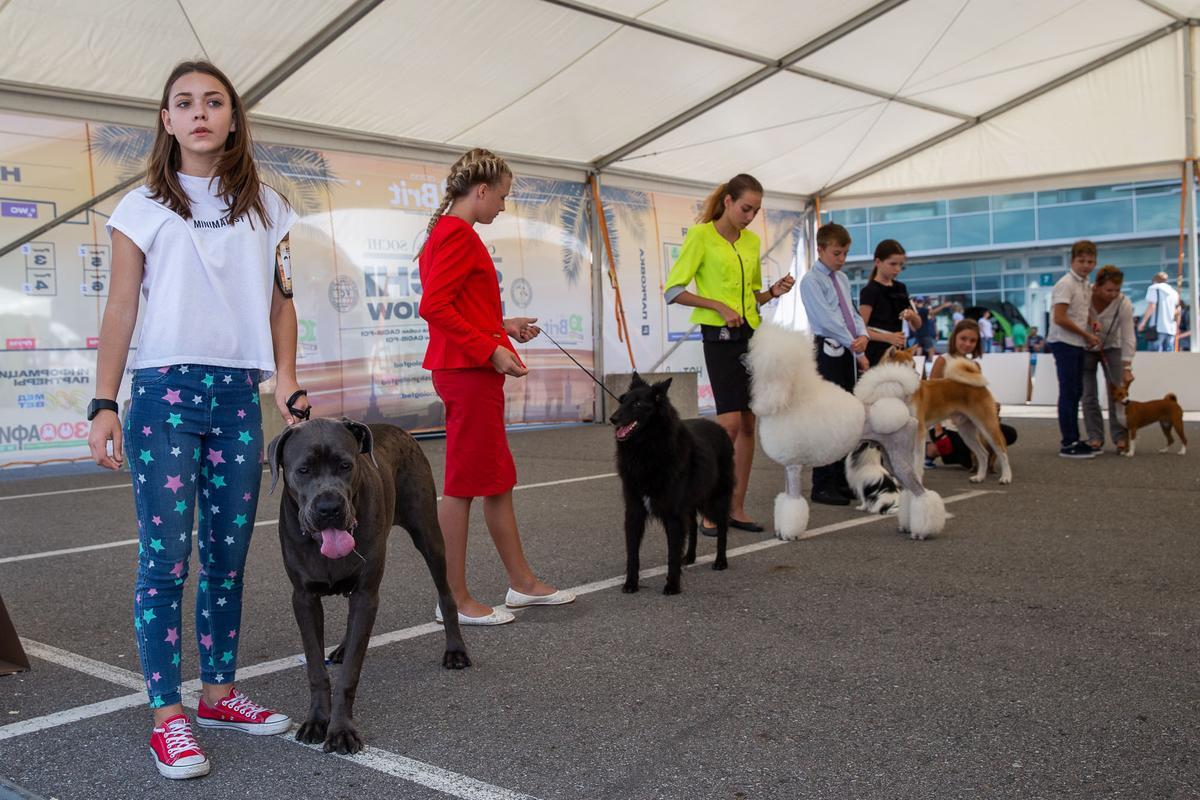 Международная выставка собак Sochi dog show — 2018