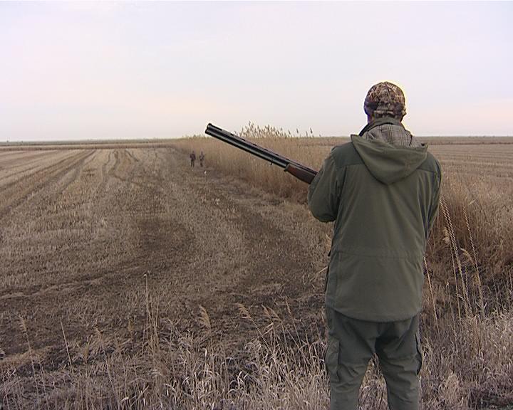 На Кубани охотники начали отстреливать лис, волков и шакалов