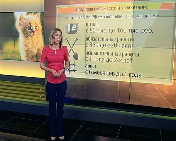 В российских СМИ выросло число сообщений о жестоком обращении с кошками