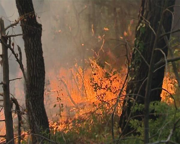 Из-за пожара в Геленджике Кондратьев распорядился увеличить число патрулей