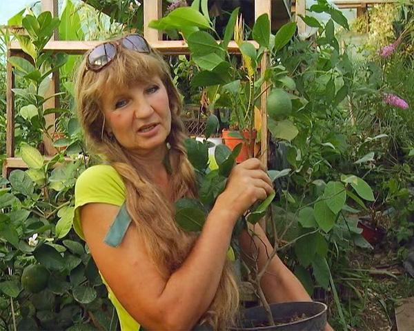 Фермеры из Сочи представят на «Кубанской ярмарке» синий чай и экзотические фрукты