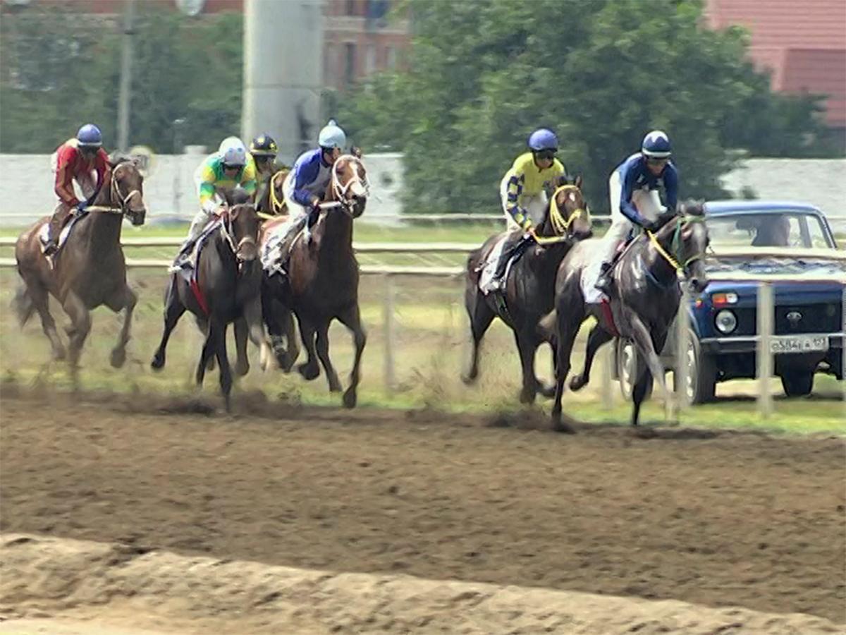 В скачках на «Большой краснодарский приз Дерби» соревновались более 100 лошадей