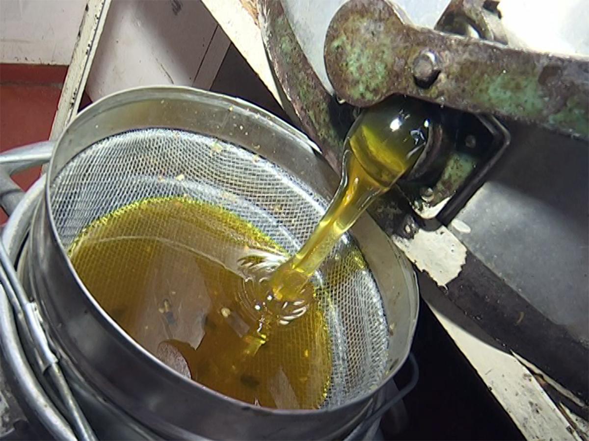 Пчеловоды Кубани начали сбор меда