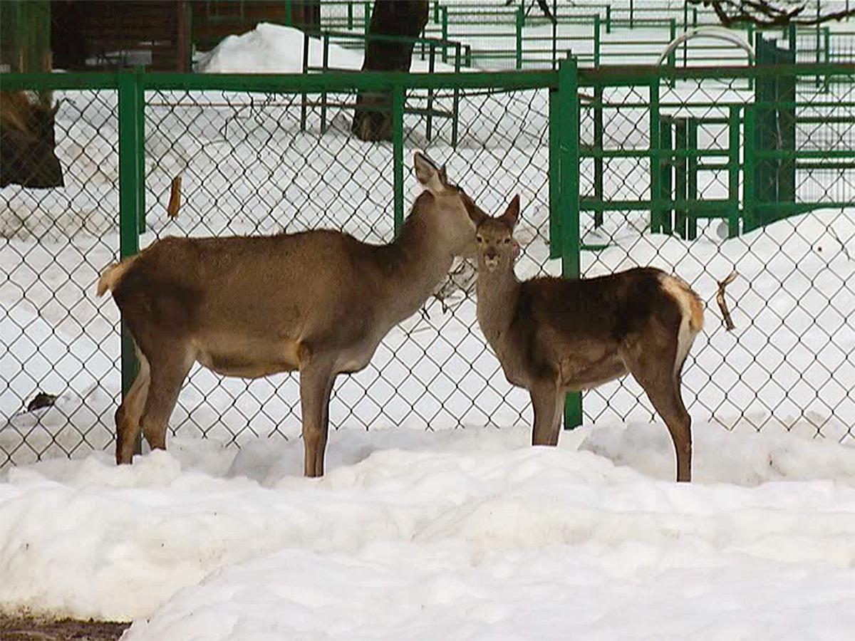 В Кавказском государственном заповеднике помогают выжить погибающим в дикой природе животным