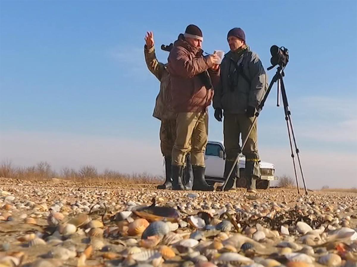 На Кубани орнитологи и участники акции «Серая шейка» подсчитали водоплавающих птиц