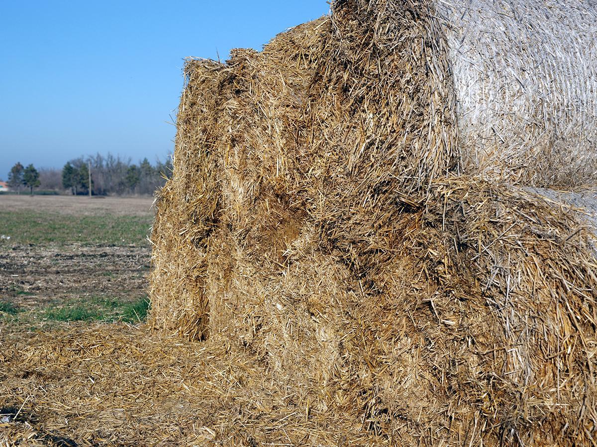 В Ленинградском районе на зиму для коров заготовят 3 тыс. т сенажа