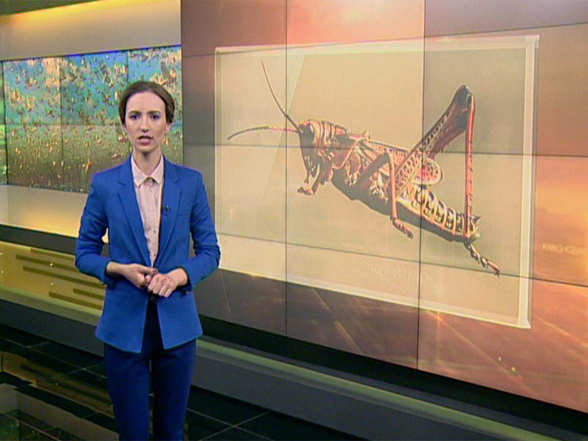 Как защитить посевы от саранчи