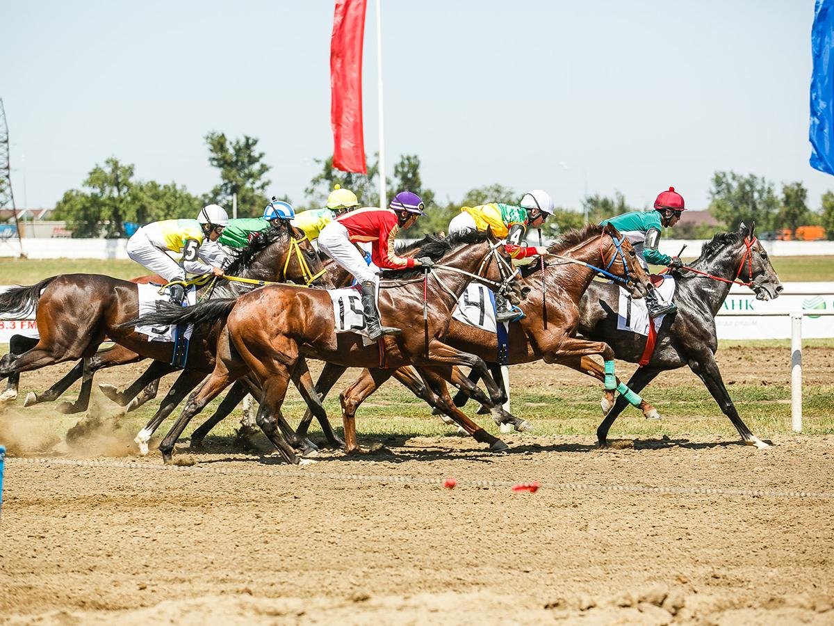 В Краснодаре прошли скачки на приз гендиректора конного завода «Восход»