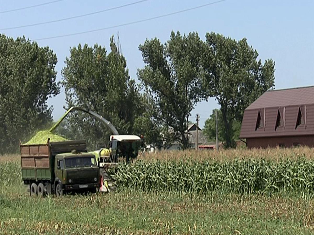 На Кубани группа по решению споров фермеров рассмотрела 250 обращений