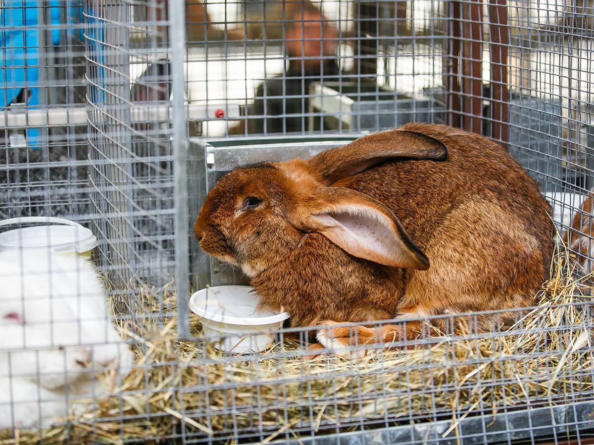 В Красноармейском районе фермер установил в крольчатнике сплит-системы