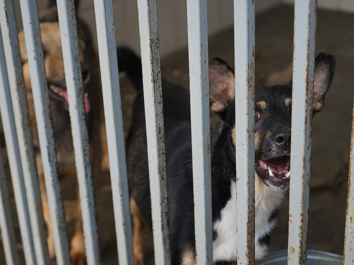 Краснодарские зоозащитники напомнили о Дне бездомных животных