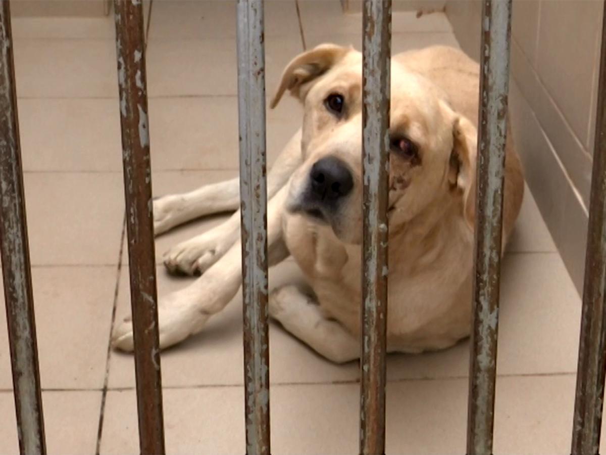 В Краснодаре отметили Всемирный день домашних животных