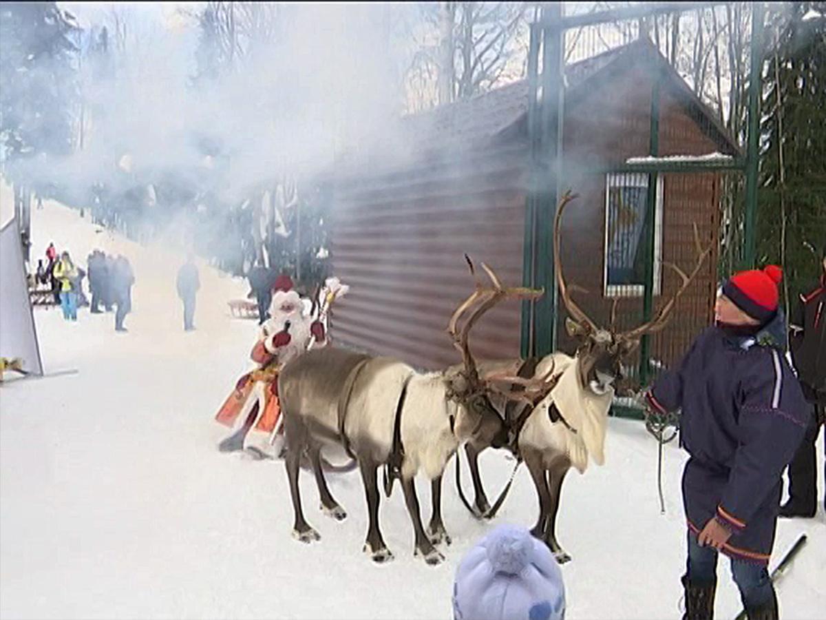 В Красной Поляне открылась оленья ферма