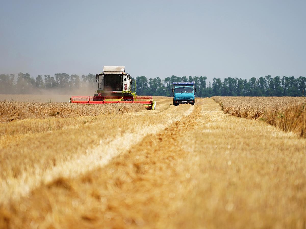 Аграрные рекорды 2017 года на Кубани