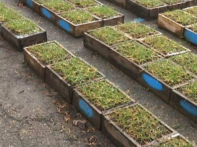 На Кубани ведут работу над устойчивыми к холодам сортами пшеницы