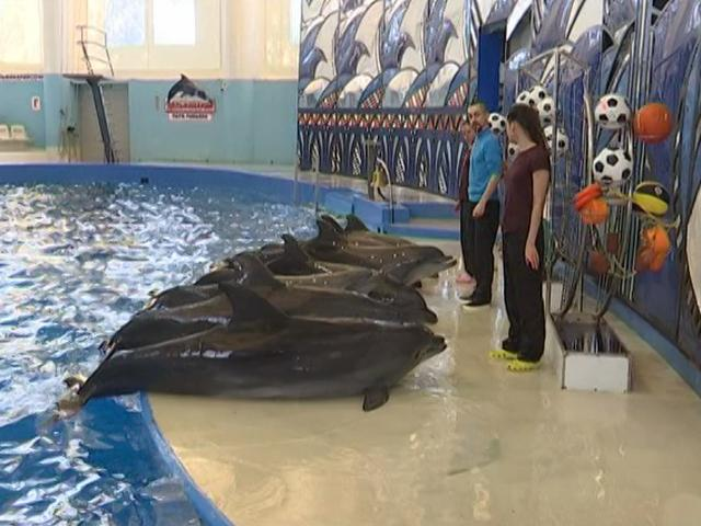 В Сочи откроют первый в России центр реабилитации для дельфинов