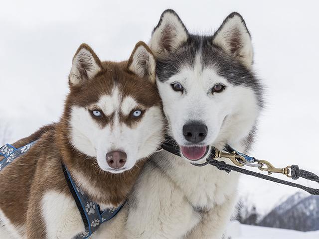 Спецрепортаж: Апре-ски