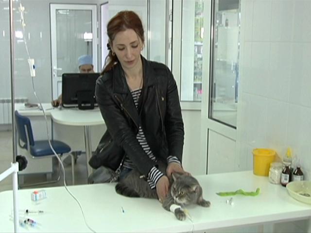 С начала года на Кубани привили от бешенства 150 тыс. кошек и собак