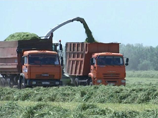 В Щербиновском районе начали заготовку кормов на зиму