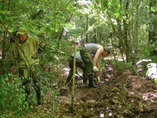 Поисковики в лесах Крымского района нашли останки 72 советских бойцов
