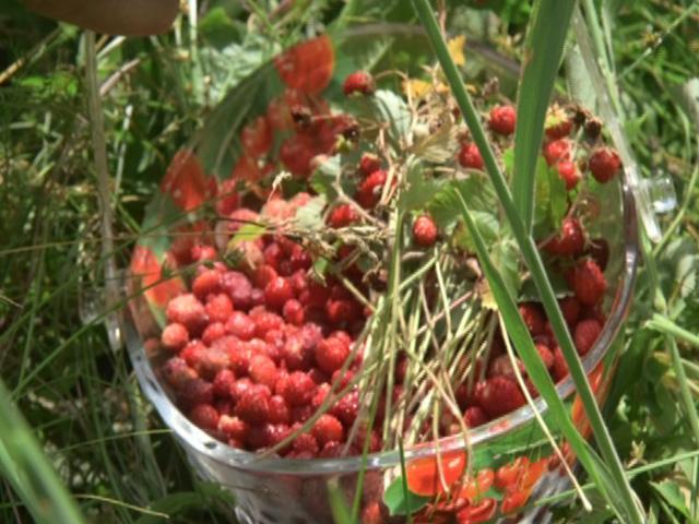 Жительница Туапсинского района поделилась рецептами блюд из земляники