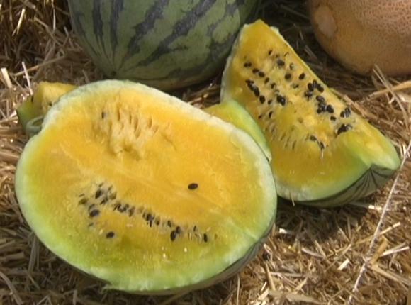 На Кубани набирают популярность желтые арбузы азиатской селекции