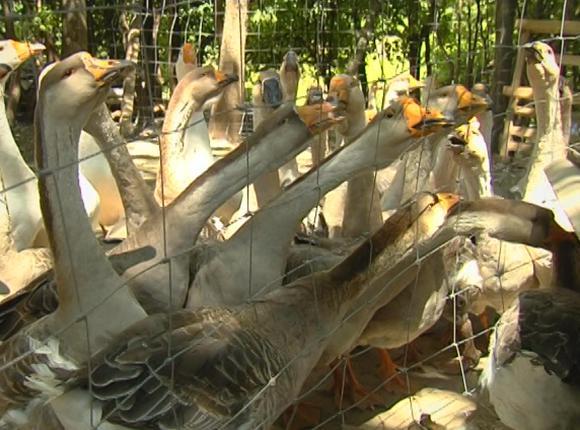 Семья из Северского района открыла агроферму