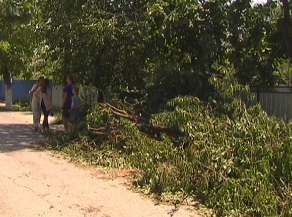 Из-за ночного ветра в Крымском районе пострадали плодовые деревья