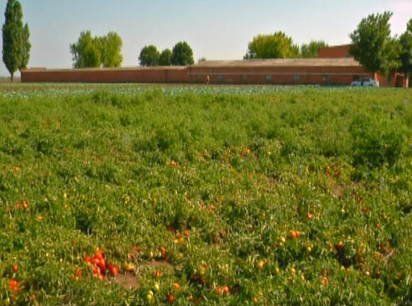 Ученые Всероссийского института риса провели День поля