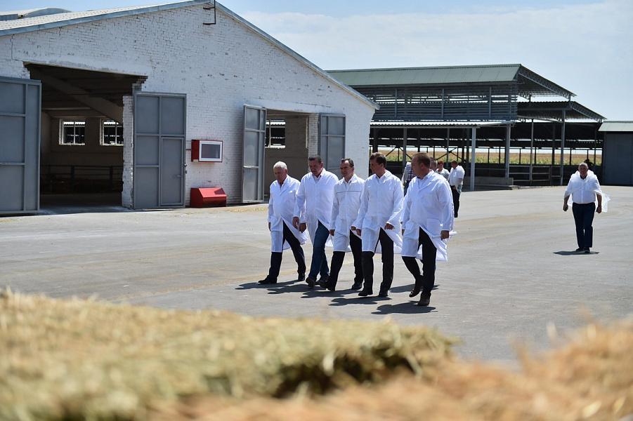 На Кубани усилят меры поддержки молочного животноводства