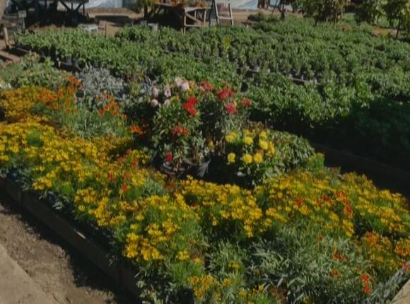 Из Кореновского района привезут на «Кубанскую ярмарку» несколько тысяч растений