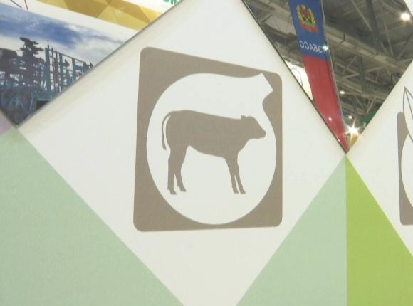 На выставке «Золотая осень» покажут проект центра воспроизводства крупного рогатого скота