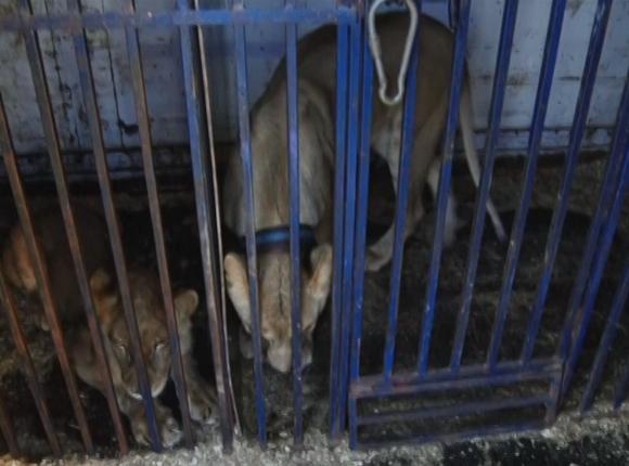 «Факты 24»: Кондратьев и Миронов обсудили ликвидацию последствий наводнения в крае, на Кубани арестовали директора цирка по делу о нападении львицы на девочку
