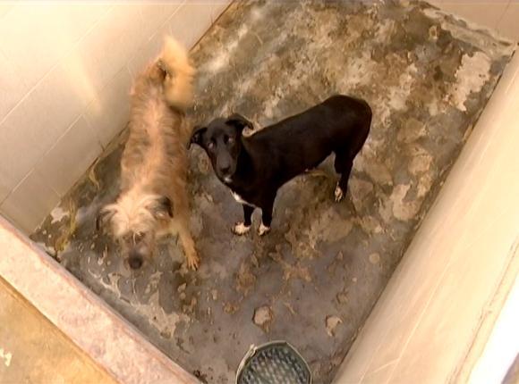 В Краснодаре планируют выделить 6 тыс. кв. м под городской приют для животных