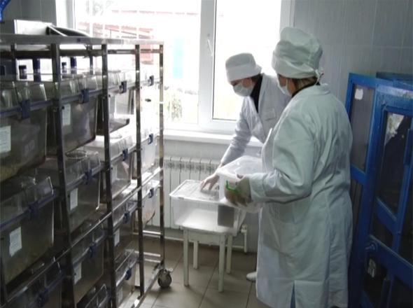 Как работают службы ветеринарного контроля на Кубани