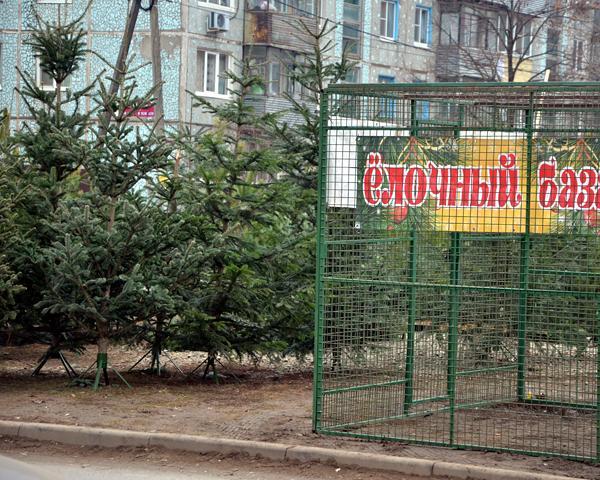 На Кубани началась борьба с незаконной вырубкой елок