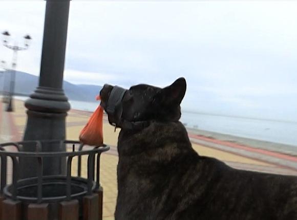 Убиравший пляж в Адлере пес Мурчик сделал хозяйку популярной в соцсетях