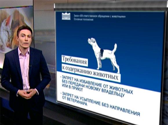 Госдума в окончательном чтении приняла закон об ответственном обращении с животными