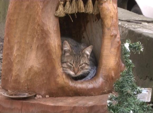 В Анапе местный житель вырезал из старого пня домик для бездомной кошки