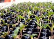 Как правильно проращивать семена