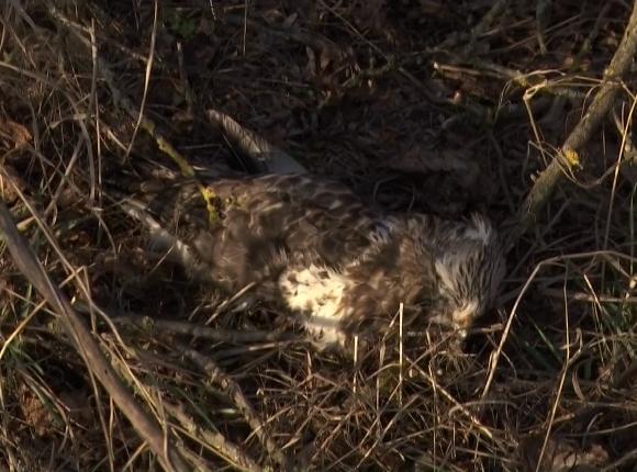 В Калининском районе зафиксировали массовую гибель птиц
