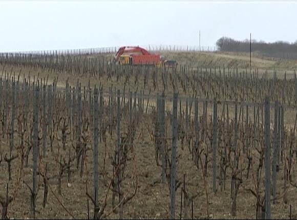 В Анапе начнут производить вина премиум- и суперпремиум-класса