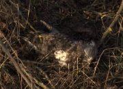 «Факты 24»: в Калининском районе зафиксировали массовую гибель птиц, Вениамин Кондратьев принял участие в селекторном совещании по утилизации отходов