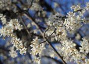 От клещей до депрессии: пять опасностей весны