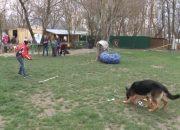 В Новороссийске прошли «веселые старты» для собак