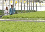 Кубанские аграрии за три месяца собрали больше 3 тыс. т тепличных овощей